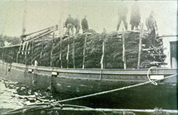 Trees Transported By Schooner